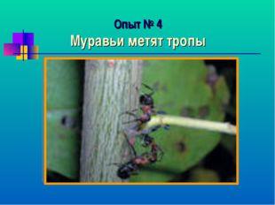 Опыт № 4 Муравьи метят тропы