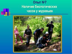 Опыт №7 Наличие биологических часов у муравьев