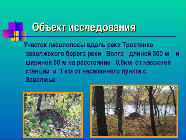 Объект исследования Участок лесополосы вдоль реки Тростянка заволжского берег...