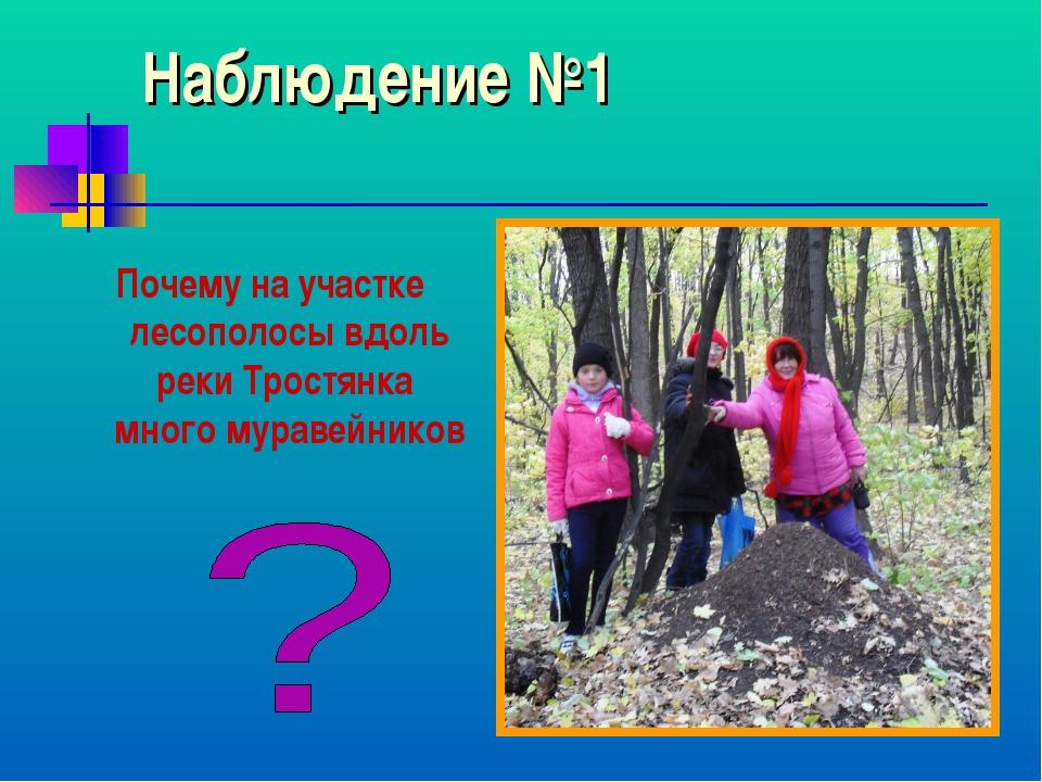 Наблюдение №1 Почему на участке лесополосы вдоль реки Тростянка много муравей...