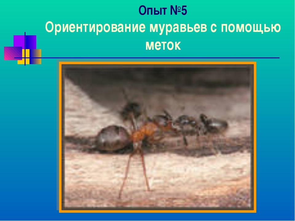 Опыт №5 Ориентирование муравьев с помощью меток