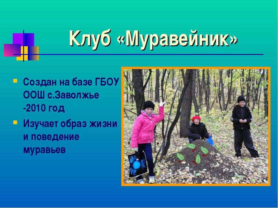 Клуб «Муравейник» Создан на базе ГБОУ ООШ с.Заволжье -2010 год Изучает образ...