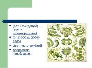 Зелёные во́доросли (лат.Chlorophyta)— группанизших растений От 13000 до 2