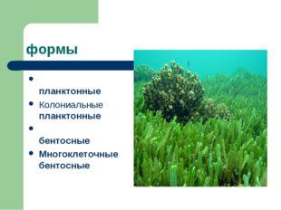 формы Однокле́точные планктонные Колониальные планктонные Однокле́точные бен
