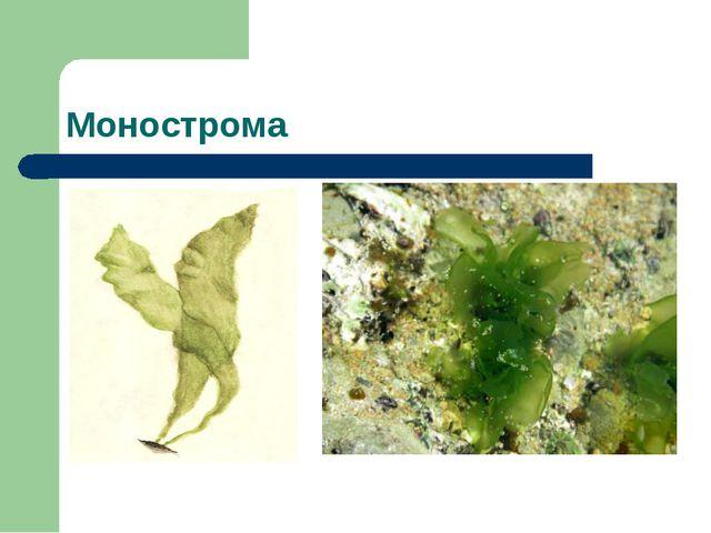 Монострома