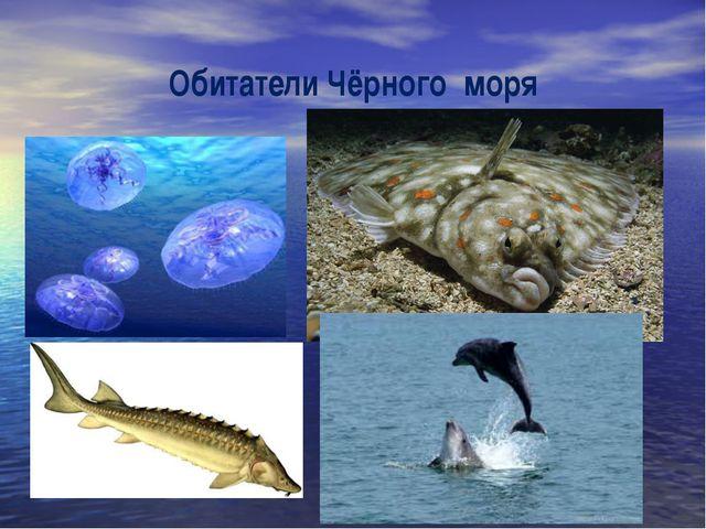 Обитатели Чёрного моря