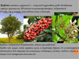 Кофеин(матеин, гуаранин)—алкалоидпуриновогоряда, бесцветные горькие крис