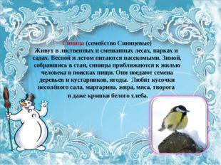Синица (семейство Синицевые) Живут в лиственных и смешанных лесах, парках и с