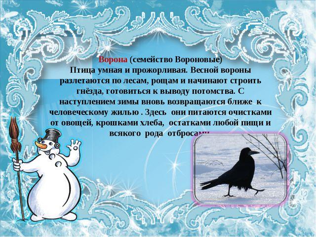 Ворона (семейство Вороновые) Птица умная и прожорливая. Весной вороны разлета...