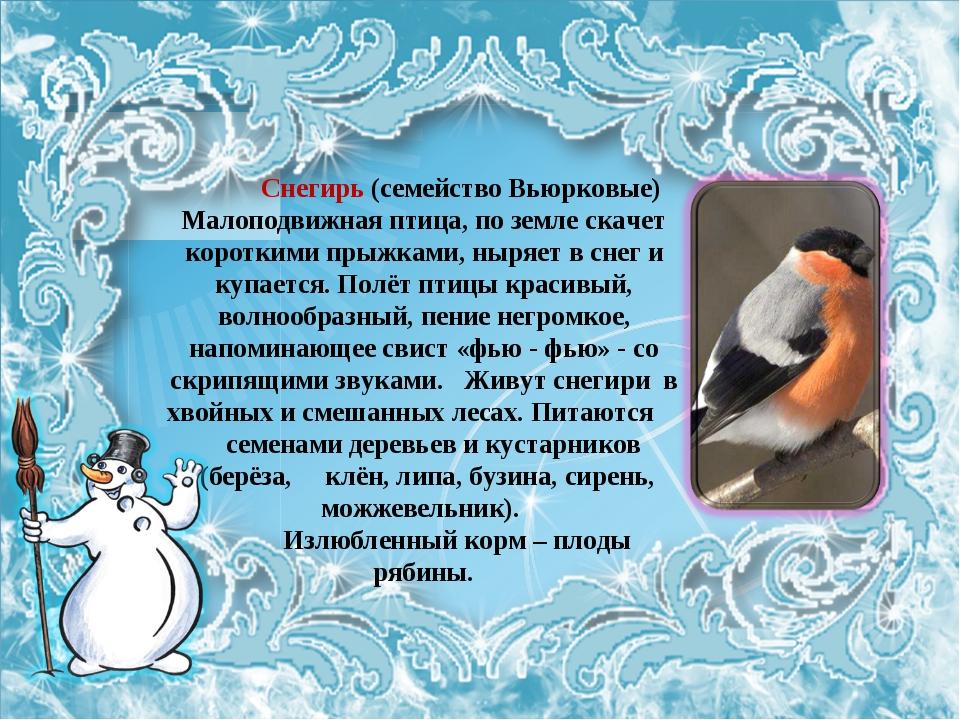 Снегирь (семейство Вьюрковые) Малоподвижная птица, по земле скачет короткими...