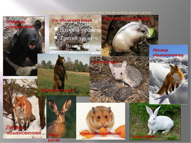 В указанном списке животных подсчитайте кол-во особей, видов и родов. Медведь...