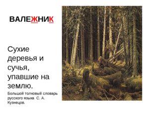 ВАЛЕЖНИК Сухие деревья и сучья, упавшие на землю. Большой толковый словарь ру