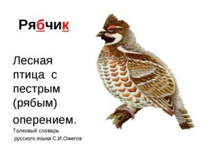 Рябчик Лесная птица с пестрым (рябым) оперением. Толковый словарь русского яз