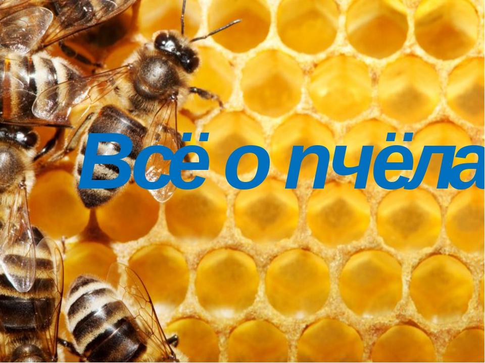 Всё о пчёлах