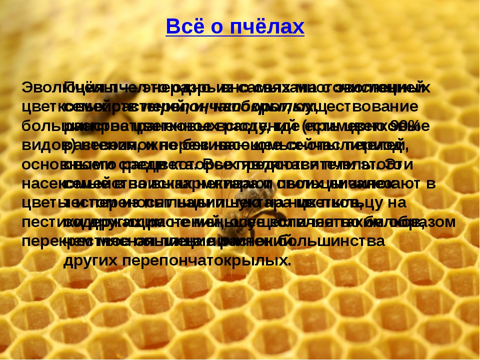 Всё о пчёлах Всё о пчёлах Пчёлы — это одно из самых многочисленных семейств п...