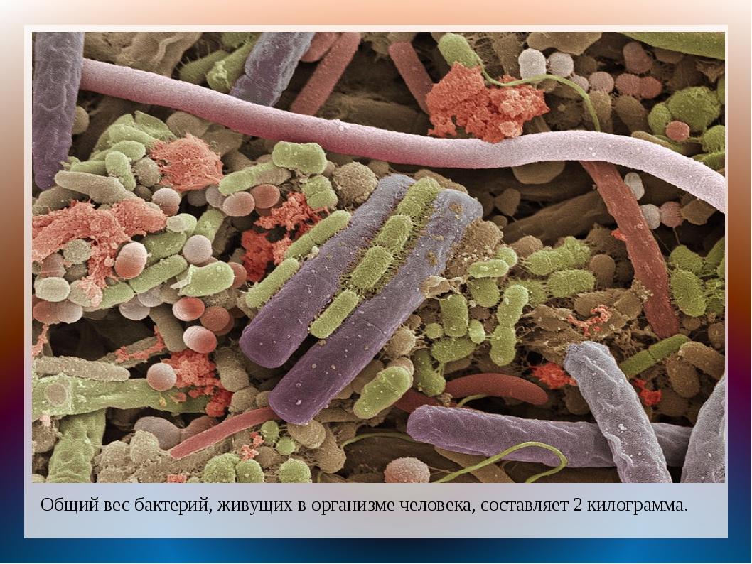 Общий вес бактерий, живущих в организме человека, составляет 2 килограмма.