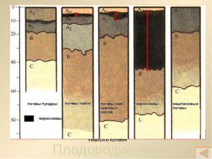 Закрепление изученного 1. Назовите известные вам условия почвообразования. По