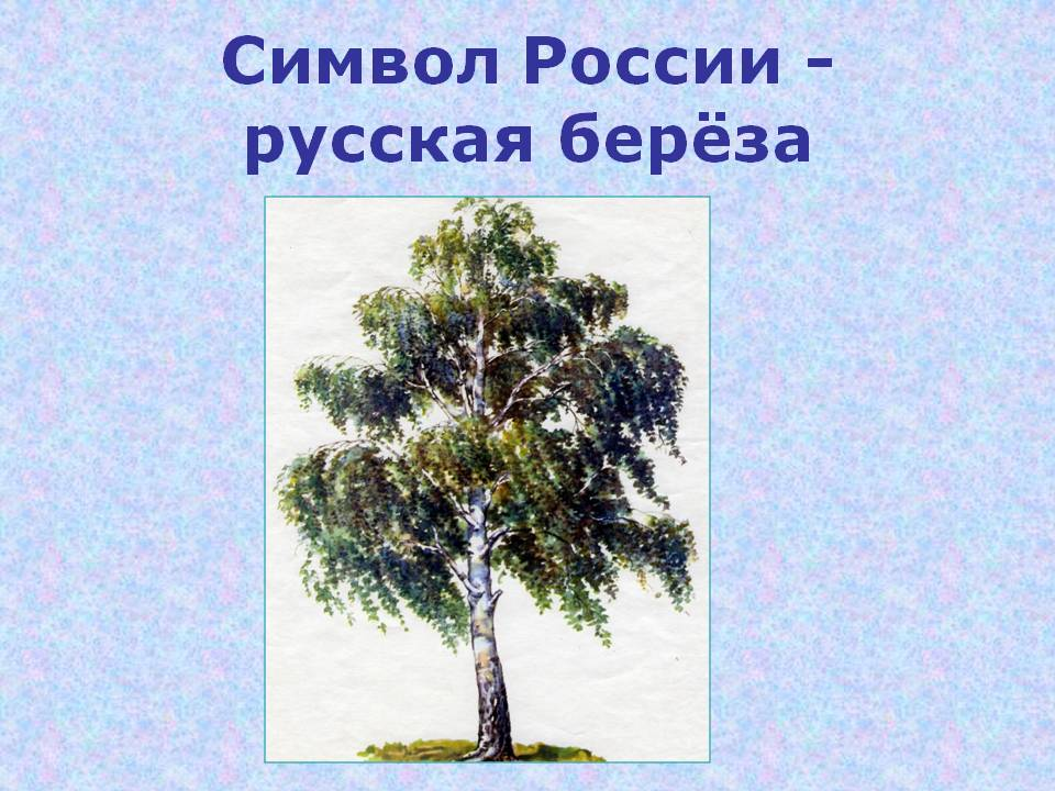 C:\Users\Виктория\Desktop\0008-008-Simvol-Rossii-russkaja-berjoza.jpg