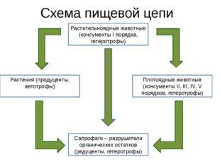 Схема пищевой цепи Растительноядные животные (консументы I порядка, гетеротро