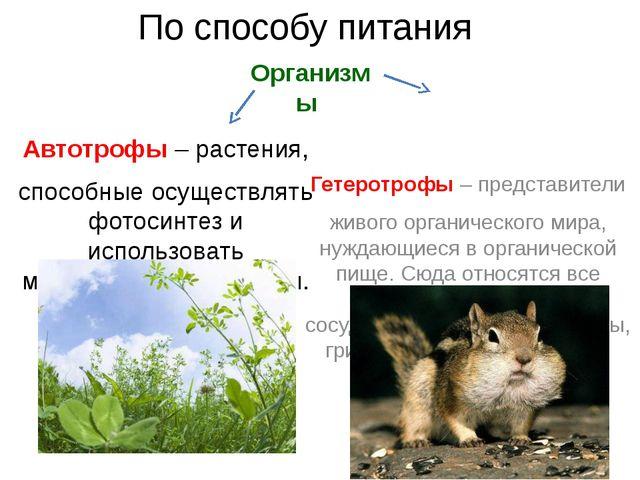 По способу питания Автотрофы – растения, способные осуществлять фотосинтез и...