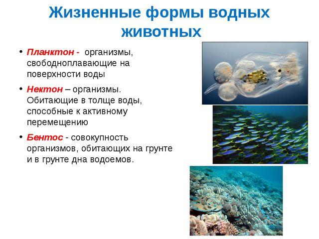 Жизненные формы водных животных Планктон - организмы, свободноплавающие на по...