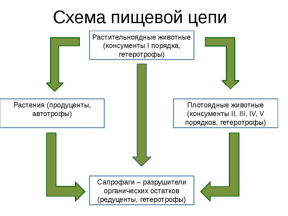 Схема пищевой цепи Растительноядные животные (консументы I порядка, гетеротро...