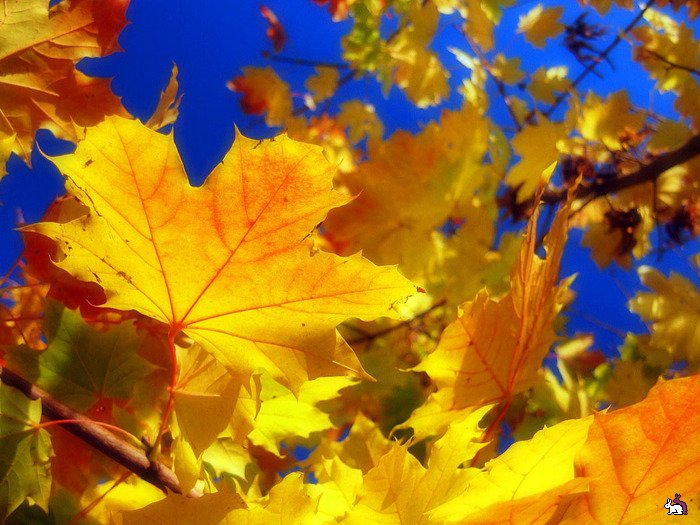 http://copypast.ru/uploads/posts/1343222895_47796664_autumn_13.jpg
