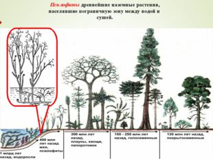 Псилофиты древнейшие наземные растения, населявшие пограничную зону между вод