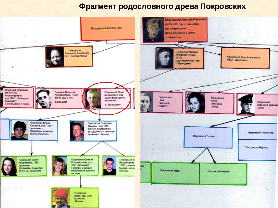 Фрагмент родословного древа Покровских