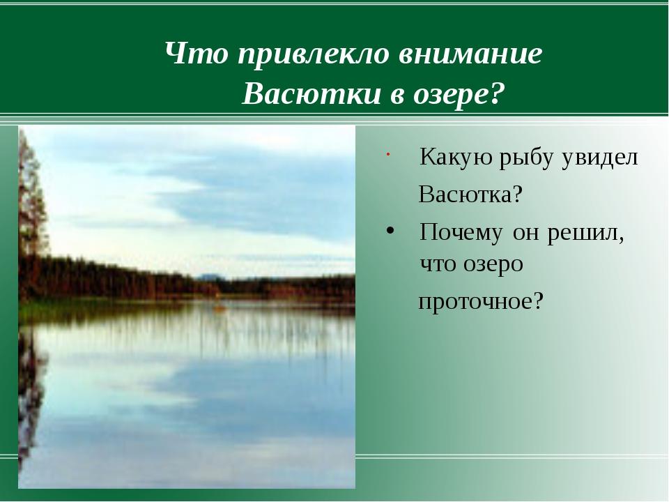 Что привлекло внимание Васютки в озере? Какую рыбу увидел Васютка? Почему он...