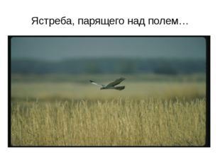Ястреба, парящего над полем…