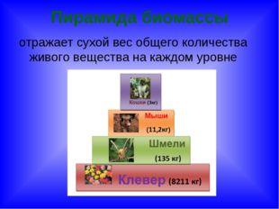 Пирамида биомассы отражает сухой вес общего количества живого вещества на каж