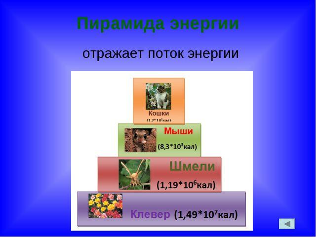 Пирамида энергии отражает поток энергии