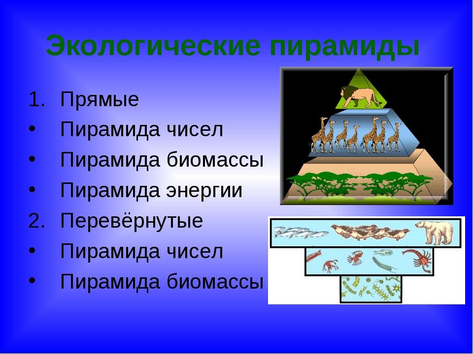 Экологические пирамиды Прямые Пирамида чисел Пирамида биомассы Пирамида энерг...