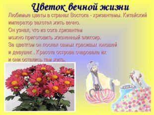 Цветок вечной жизни Любимые цветы в странах Востока - хризантемы. Китайский