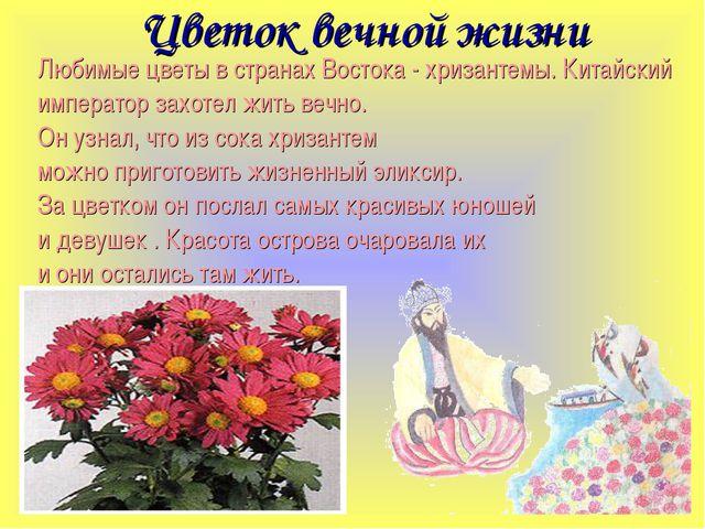 Цветок вечной жизни Любимые цветы в странах Востока - хризантемы. Китайский...