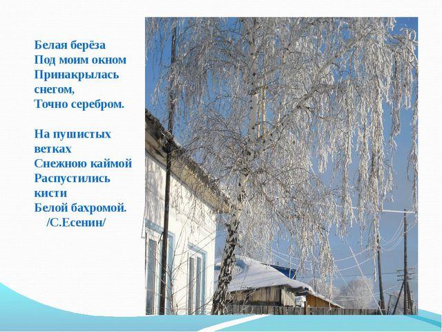 Белая берёза Под моим окном Принакрылась снегом, Точно серебром. На пушистых...