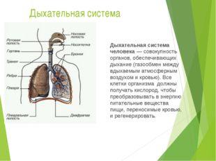 Дыхательная система Дыхательная система человека— совокупность органов, обес