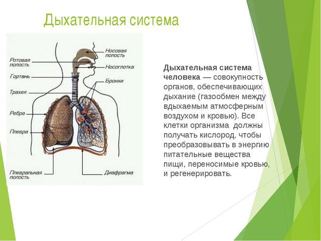 Дыхательная система Дыхательная система человека— совокупность органов, обес...