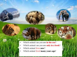 Which animal can you see in the zoo? Which animal can you see only in a book