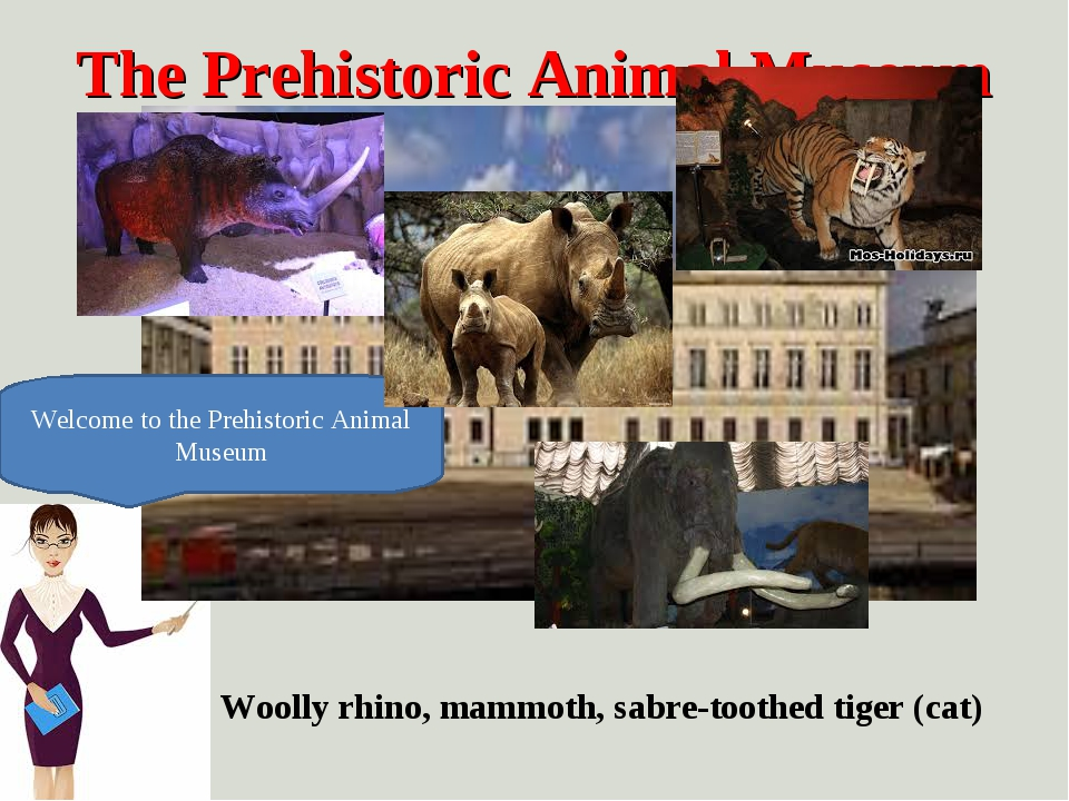The Prehistoric Animal Museum Welcome to the Prehistoric Animal Museum Woolly...