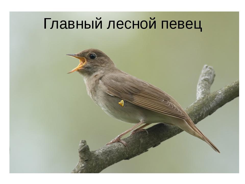 Главный лесной певец