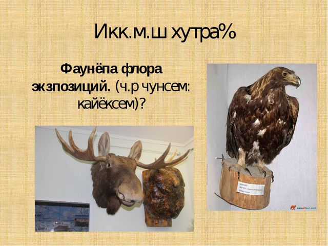 Икк.м.ш хутра% Фаунёпа флора экзпозиций. (ч.р чунсем: кайёксем)?