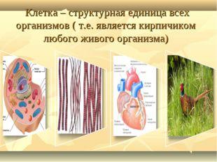 Клетка – структурная единица всех организмов ( т.е. является кирпичиком любо