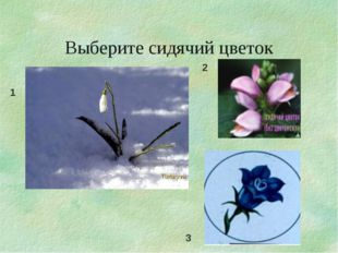 Выберите сидячий цветок 1 2 3