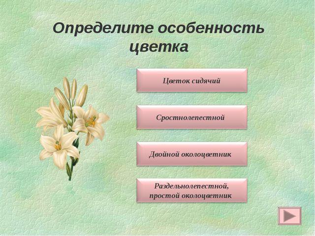 Определите особенность цветка