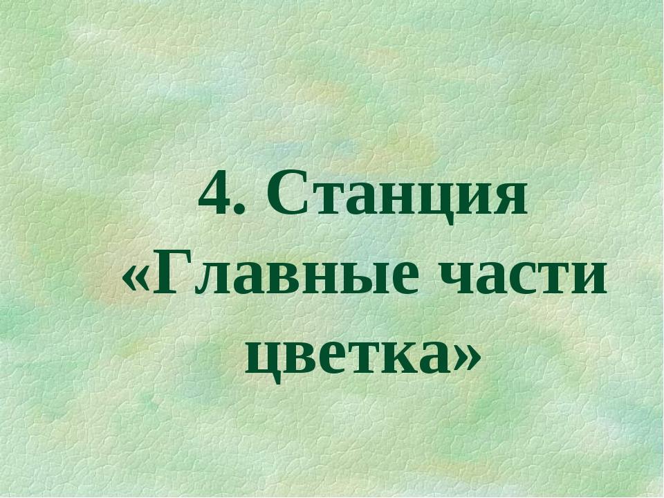 4. Станция «Главные части цветка»
