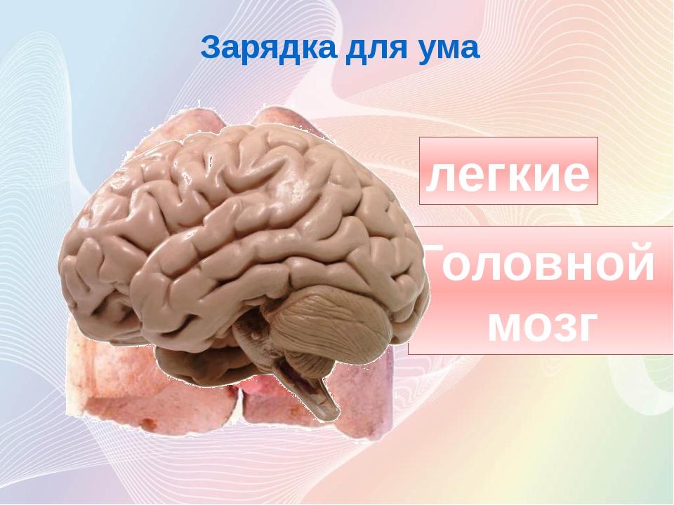 легкие Головной мозг Зарядка для ума