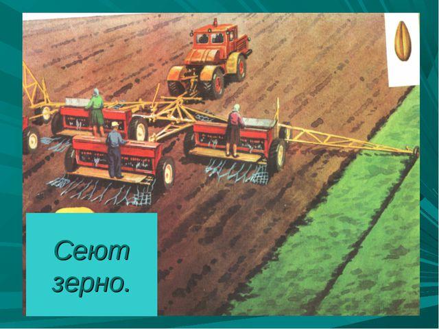 Сеют зерно.