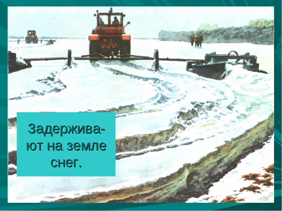 Задержива-ют на земле снег.